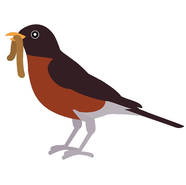 Birds robin. European bird american png