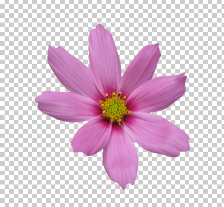 Icon PNG, Clipart, Annual Plant, Art, Button, Computer Graphics, Cosmos Free PNG Download