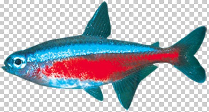 Milkfish Marine Biology Sardine Coral Reef Fish Marine Mammal PNG, Clipart, Animals, Biology, Blue, Bony Fish, Coral Free PNG Download