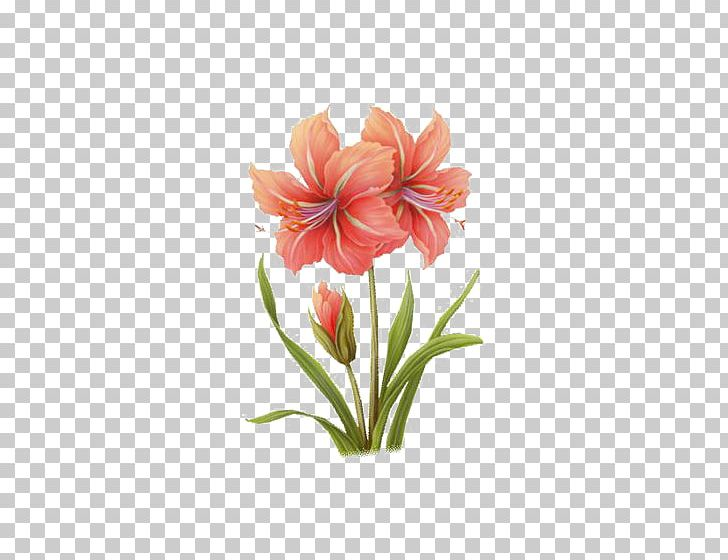 Watercolor: Flowers Watercolor Painting PNG, Clipart, Amaryllis Family, Flower, Flower Arranging, Hippeastrum, Ink Free PNG Download
