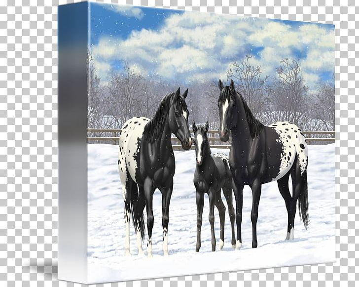 Stallion Appaloosa American Paint Horse American Quarter