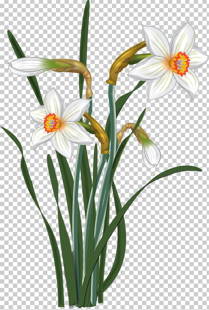 Watercolour Flowers Watercolor Painting Drawing PNG, Clipart, Amaryllis Belladonna, Amaryllis Family, Cut Flowers, Drawing, Flora Free PNG Download
