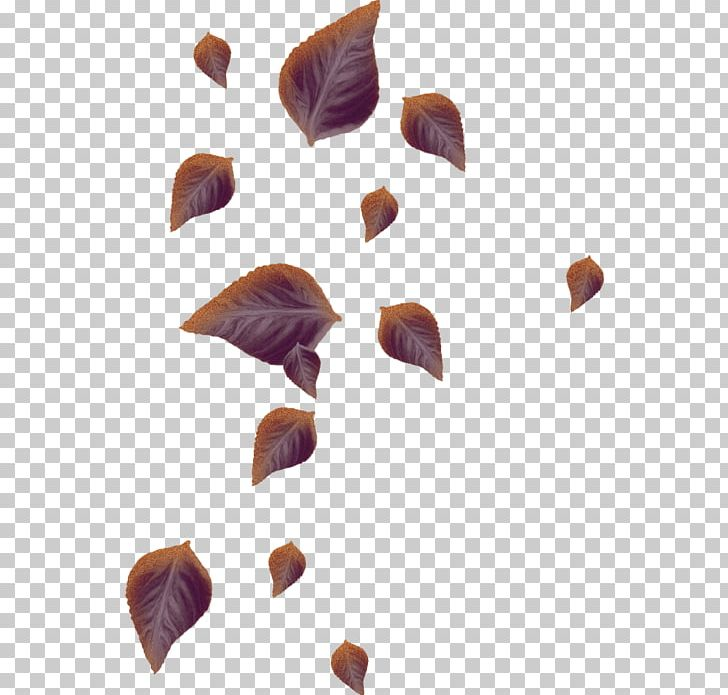 Deciduous Leaf Petal Tree PNG, Clipart, Deciduous, Download, Encapsulated Postscript, Leaf, Material Free PNG Download