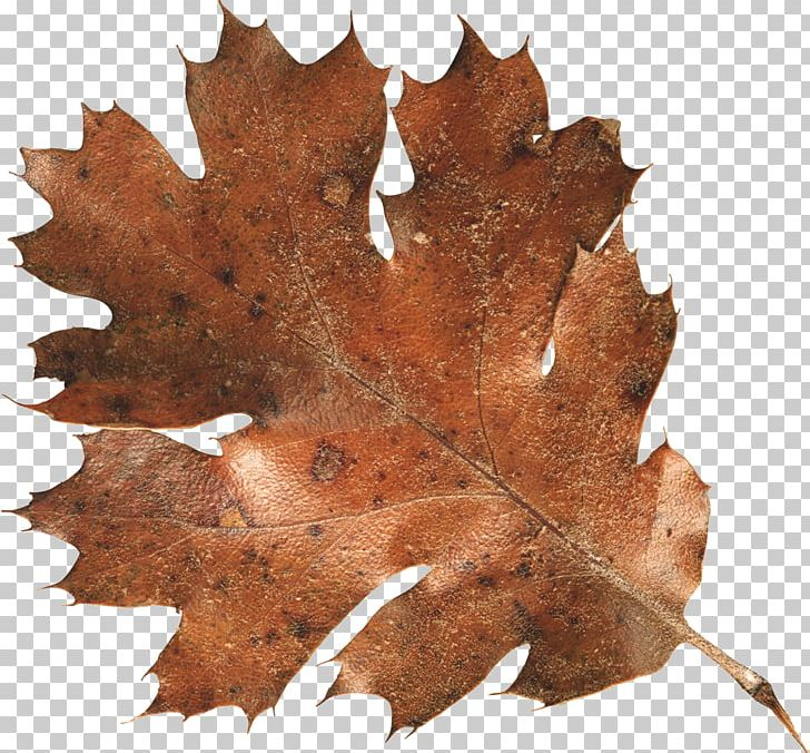Autumn Leaf Color PNG, Clipart, Autumn, Autumn Leaf Color, Autumn Leaves, Color, Computer Icons Free PNG Download
