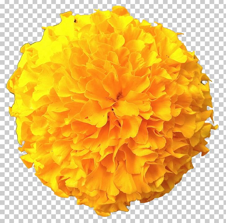 Image File Formats Orange Color PNG, Clipart, Color, Display Resolution, Download, Flower, Flowers Free PNG Download