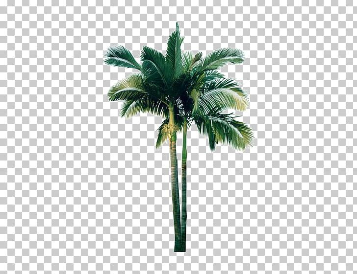 Flower Shrub PNG, Clipart, Arecaceae, Arecales, Beach, Big, Big Tree Free PNG Download