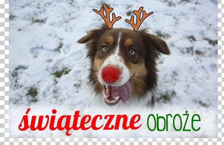 Dog Breed Australian Shepherd Puppy Collar Yorkshire Terrier PNG
