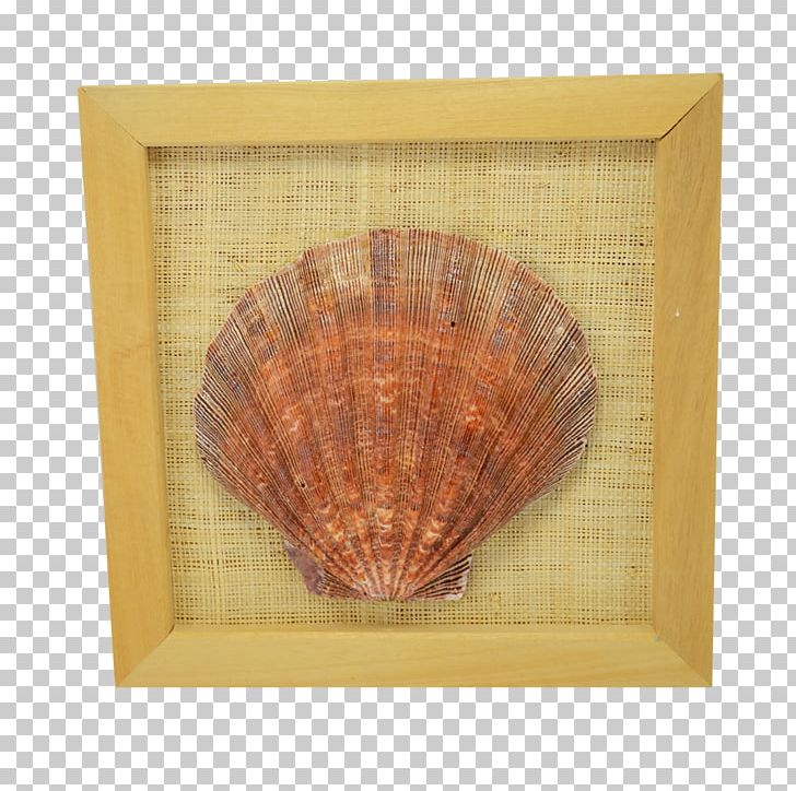 Seashell Lion Cockle 8x8 PNG Clipart Inc Animals