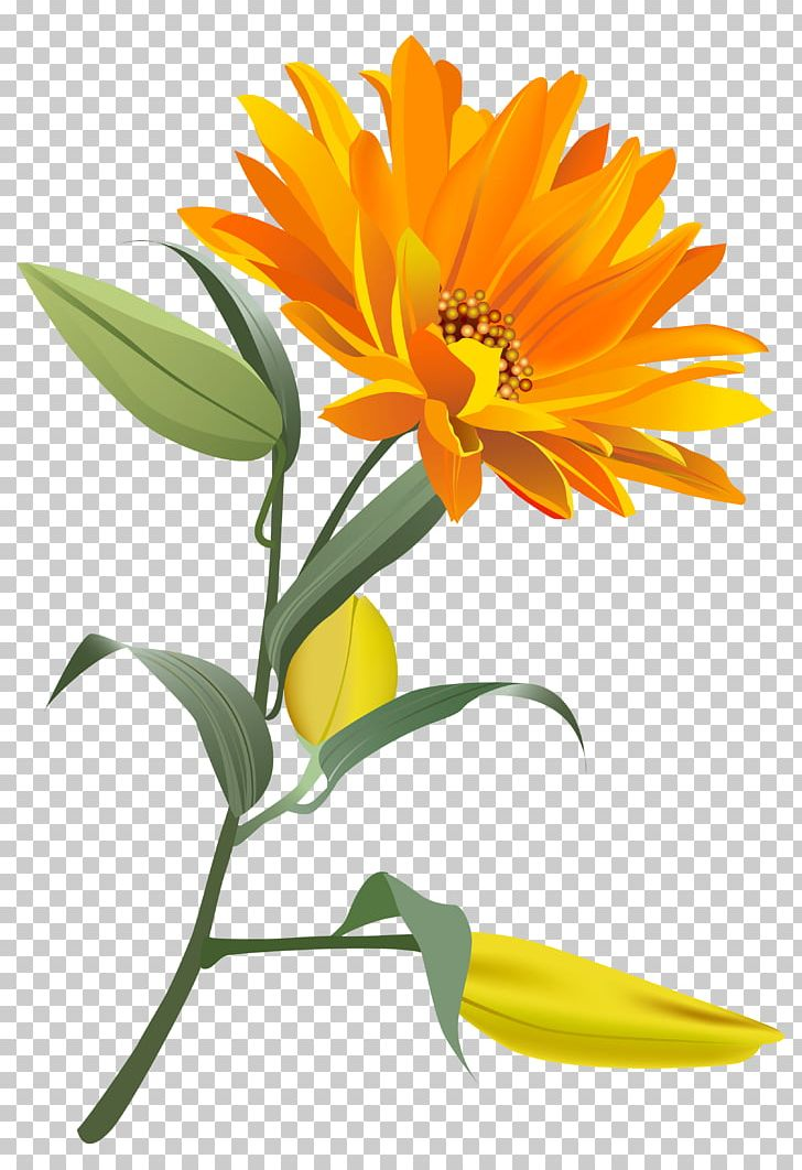 Flower PNG, Clipart, Blue, Calendula, Chrysanthemum, Clipart, Clip Art Free PNG Download