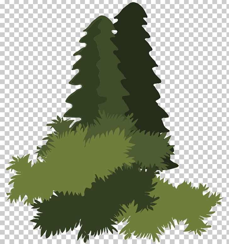 Spruce Abies Religiosa Bosque De Pino Encino Forest Plant Png