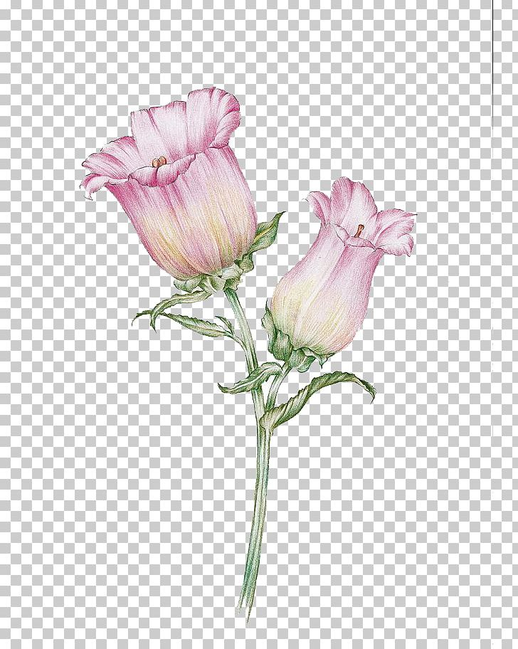 Watercolor Flowers PNG, Clipart, Bellflowers, Bud, Cartoon, Flower, Flower Arranging Free PNG Download