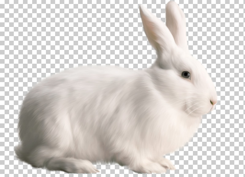 Rabbit Rabbits And Hares White Hare Snowshoe Hare PNG, Clipart, Animal Figure, Arctic Hare, Ear, Hare, Rabbit Free PNG Download