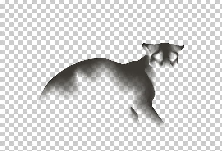 Whiskers Cat Dog Canidae Snout PNG, Clipart, Black And White, Canidae, Carnivoran, Cat, Cat Like Mammal Free PNG Download