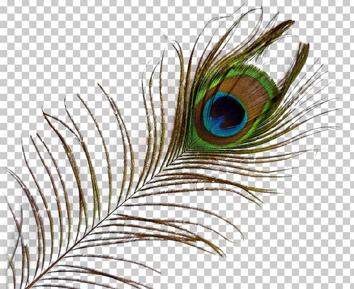 Feather PNG, Clipart, Bbcode, Beak, Bird, Birds, Clip Art Free PNG Download