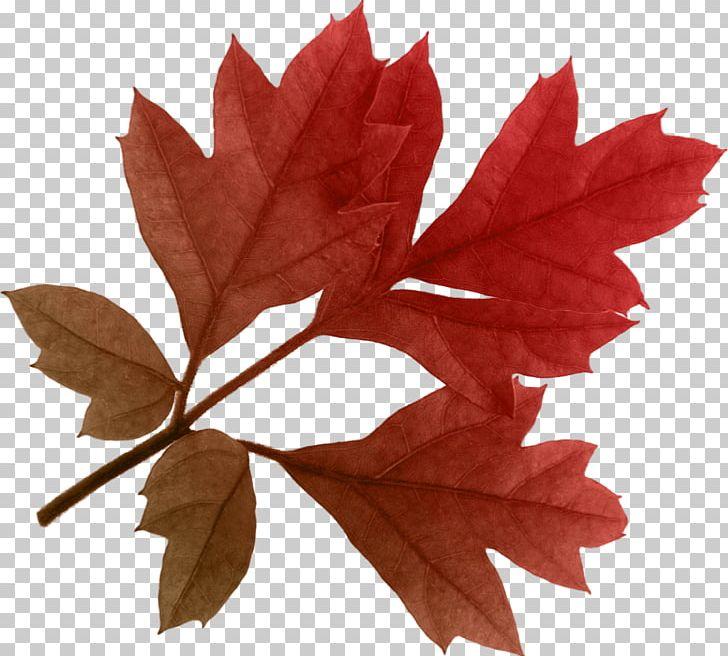Autumn Leaf Color PNG, Clipart, Autumn, Autumn Leaf Color, Autumn Leaves, Beautiful, Bodyshope Free PNG Download