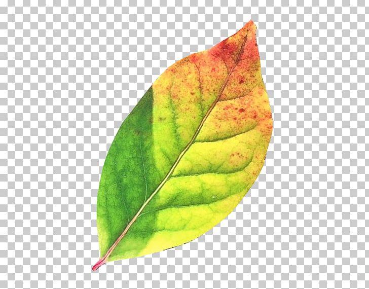 Autumn Leaf Color Desktop PNG, Clipart, Autumn, Autumn Leaf, Autumn Leaf Color, Desktop Wallpaper, Green Free PNG Download