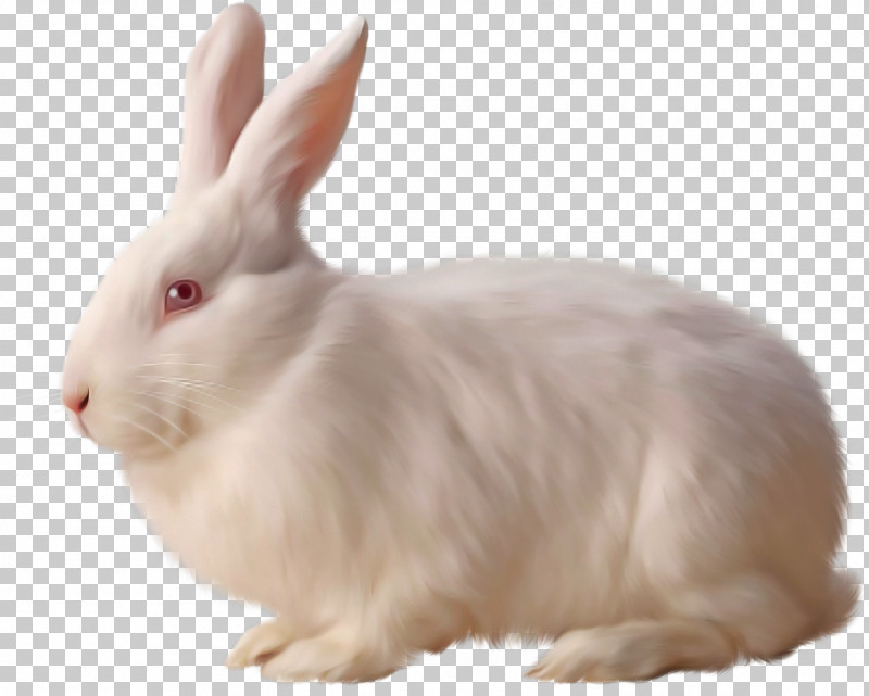 Rabbit Rabbits And Hares Hare Snowshoe Hare Ear PNG, Clipart, Animal Figure, Ear, Hare, Rabbit, Rabbits And Hares Free PNG Download