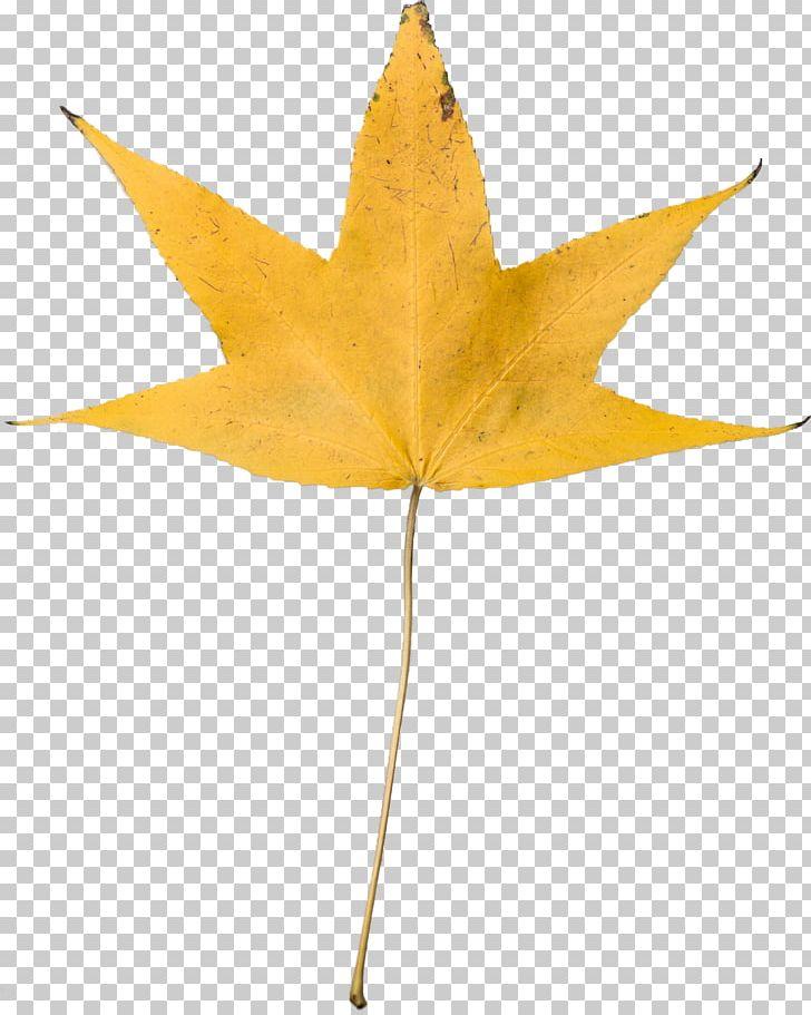 Autumn Leaf Color Desktop Yellow PNG, Clipart, Autumn, Autumn Leaf Color, Desktop Wallpaper, Green, Leaf Free PNG Download