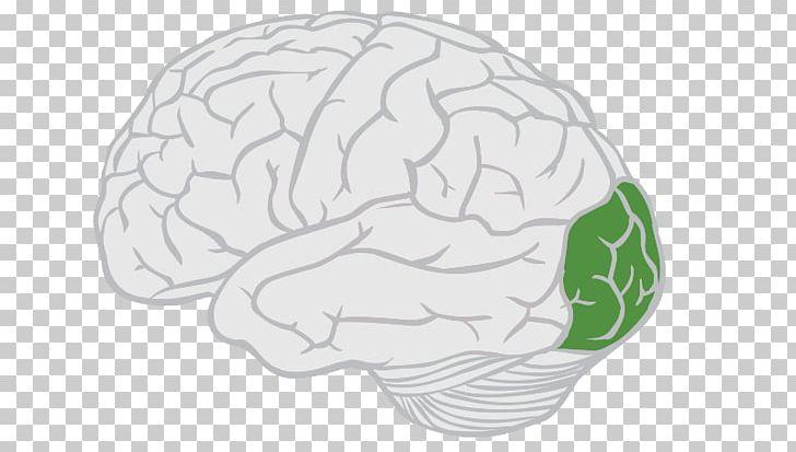 Lobes Of The Brain Frontal Lobe Parietal Lobe PNG, Clipart, Anatomy, Brain, Cerebral Cortex, Cortex, Emaze Free PNG Download