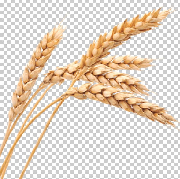 Food Cereal Biscuits Wheat Germ Oil Soap PNG, Clipart, Avena, Bread, Cereal Germ, Cleanser, Commodity Free PNG Download