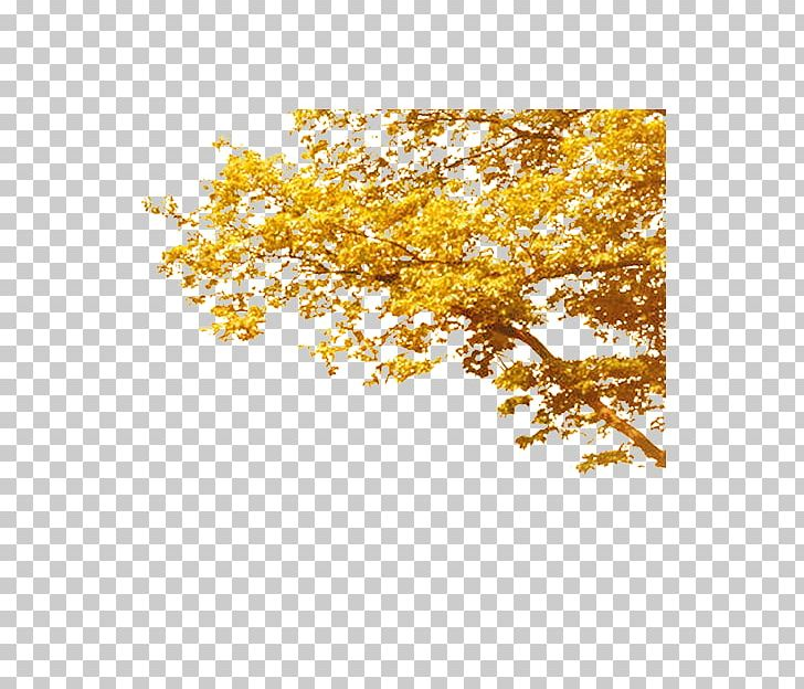 Tree Autumn Deciduous Computer File PNG, Clipart, Arecaceae, Autumn, Autumn Leaves, Christmas Tree, Computer File Free PNG Download