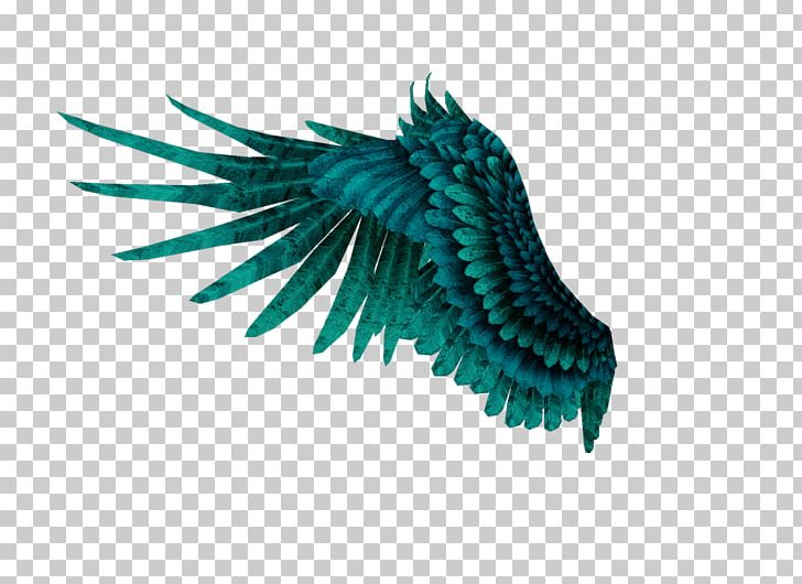Angel Wing PNG, Clipart, Angel, Angel Wing, Angel Wings