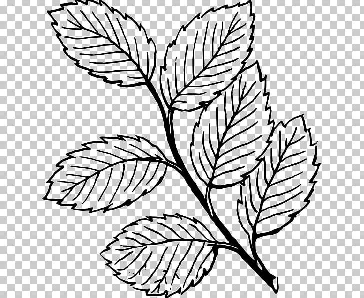 Look At Leaves Leaf White PNG, Clipart, Autumn Leaf Color, Black, Black And White, Blog, Branch Free PNG Download
