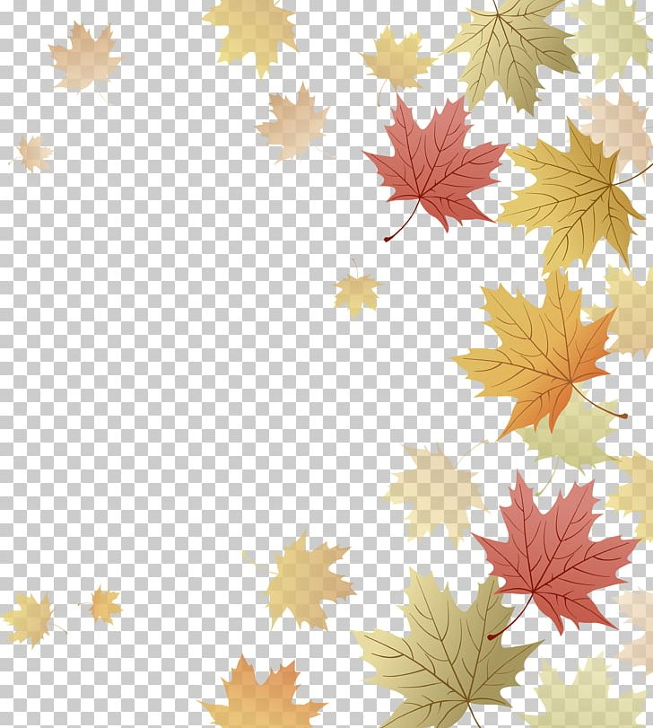 Japanese Maple Red Maple Maple Leaf Autumn PNG, Clipart, Autumn, Autumn Leaf Color, Autumn Leaves, Computer Wallpaper, Desktop Wallpaper Free PNG Download