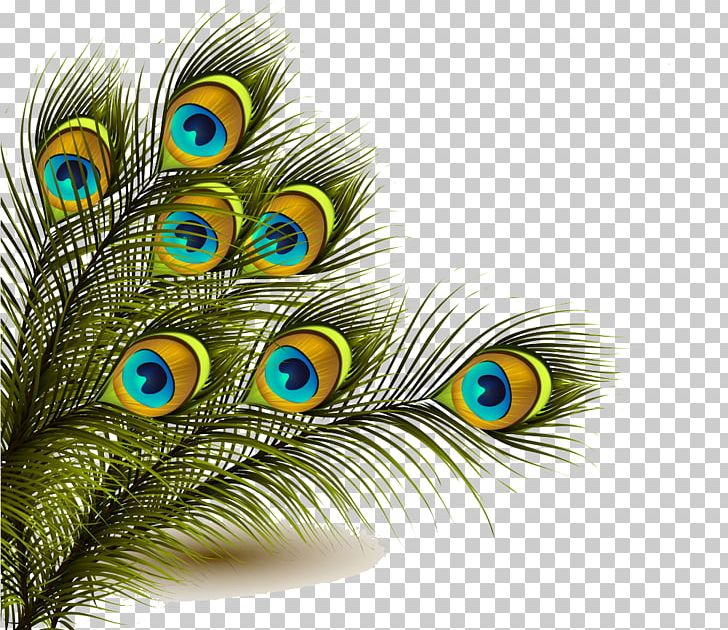 Peafowl Feather PNG, Clipart, Animals, Asiatic Peafowl, Cartoon, Clip Art, Closeup Free PNG Download