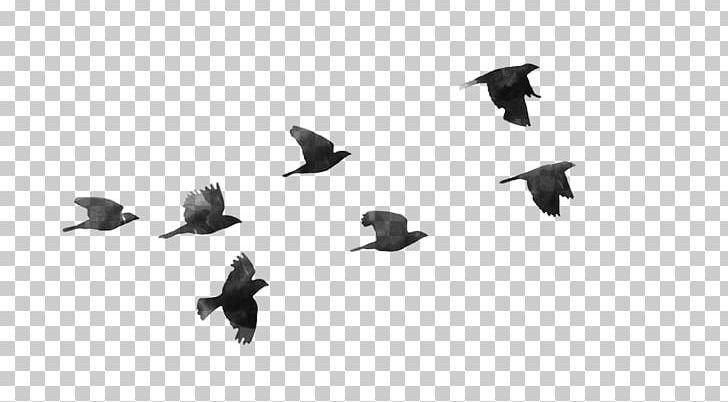 Bird Flight Bird Flight PNG, Clipart, Angle, Animals, Bird, Bird Flight, Birds Free PNG Download