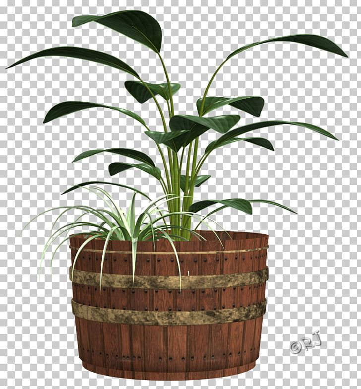 Arecaceae Flowerpot Houseplant Grasses Family PNG, Clipart, Arecaceae, Arecales, Family, Flowerpot, Grass Free PNG Download