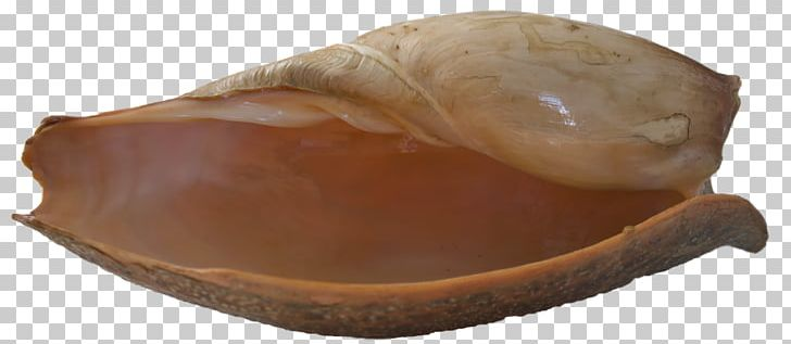 Seashell Clam Bivalvia Mollusc Shell PNG, Clipart, Beach, Bivalvia, Clam, Clams Oysters Mussels And Scallops, Lymnaeidae Free PNG Download