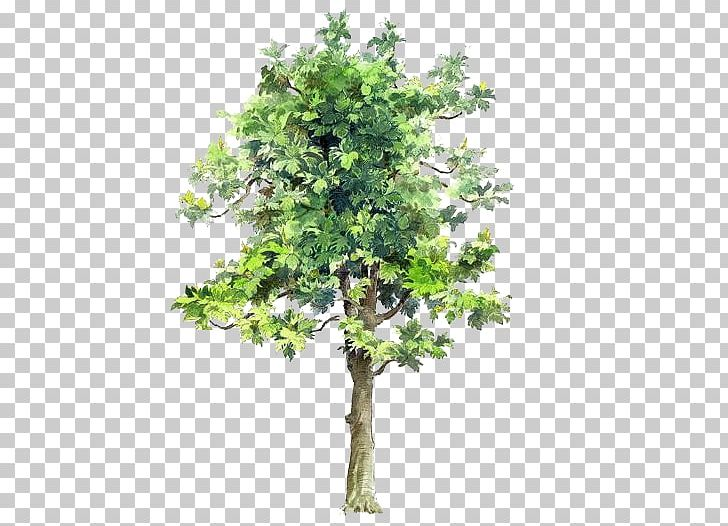 Tree Drawing Watercolor Painting Architecture PNG, Clipart, Architect, Background, Bauhinia Xd7 Blakeana, Branch, Cartoon Free PNG Download