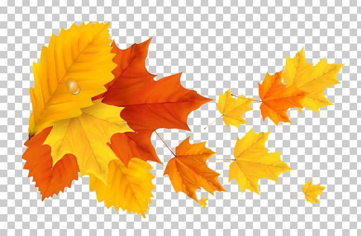Autumn Leaf Color PNG, Clipart, Autumn, Autumn Leaf Color, Clipart, Clip Art, Desktop Wallpaper Free PNG Download