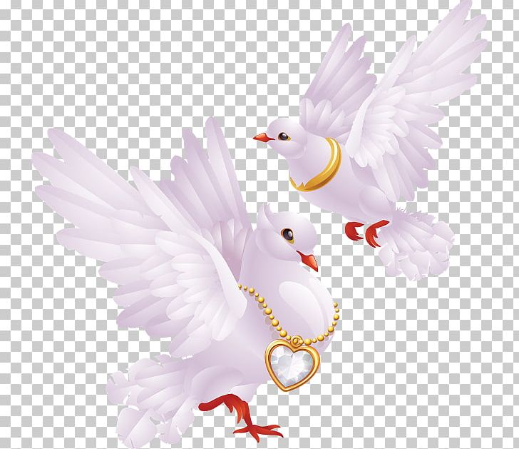 Valentine's Day Greeting & Note Cards PNG, Clipart, Beak, Bird, Bird Of Prey, Can Stock Photo, Chicken Free PNG Download