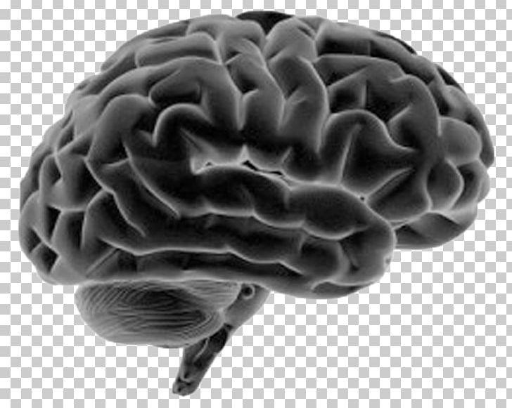 Human Brain Human Body Nervous System Anatomy PNG, Clipart, Anatomy, Brain, Cerebrum, Corpus Callosum, Diagram Free PNG Download