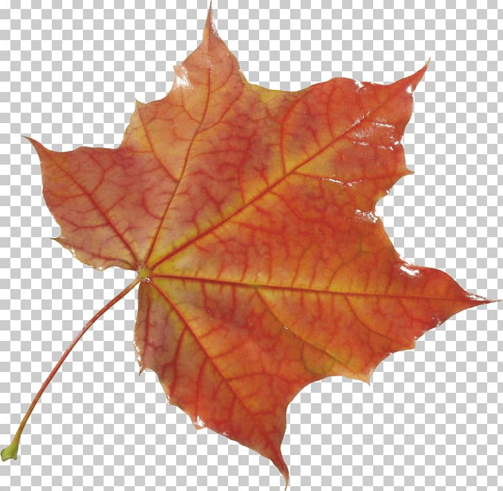 Autumn Leaf Color Autumn Leaf Color PNG, Clipart, Autumn, Autumn Leaf Color, Autumn Leaves, Bodyshope, Clouds Free PNG Download