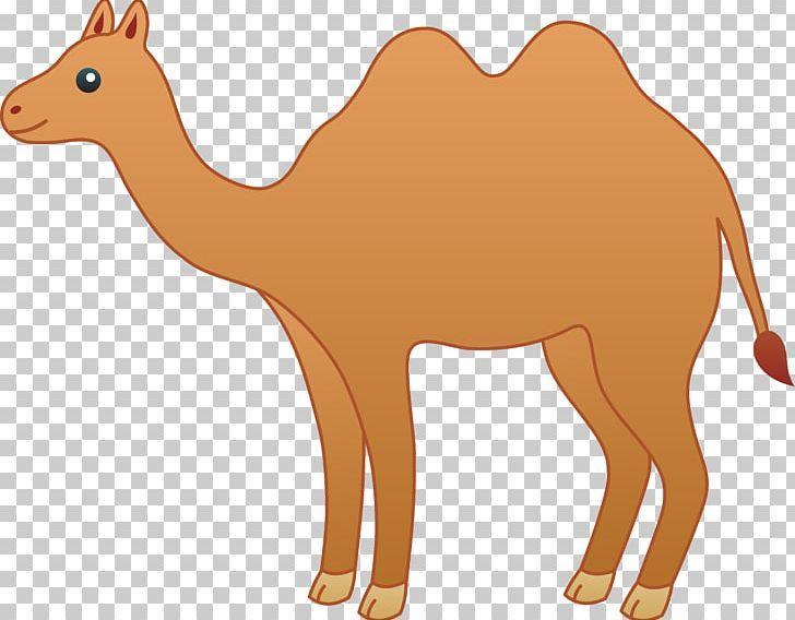 Bactrian Camel Cartoon Drawing PNG, Clipart, Arabian Camel