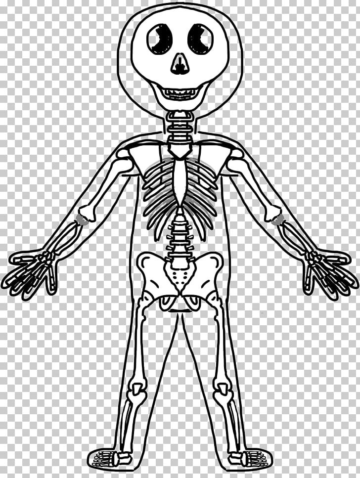 Human Skeleton Human Body Anatomy Muscle Png Clipart Anatomy Art Cartoon Child Diagram Free Png Download