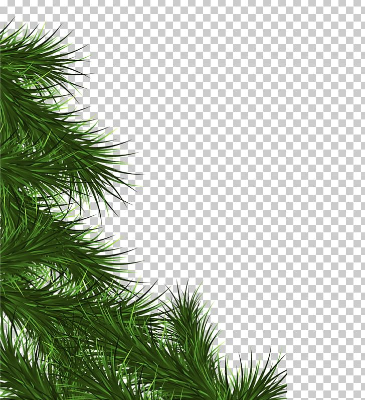 Christmas Leaf Png.Fir Branch Christmas Tree Leaf Png Clipart Branch