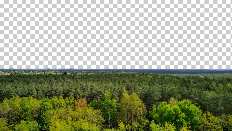 Forest Temperate Broadleaf And Mixed Forests Ecoregion Vegetation Shrubland PNG, Clipart, Broadleaved Tree, Conifers, Ecoregion, Escarpment, Forest Free PNG Download