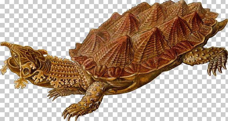 Turtle Reptile Archelon Mata Mata PNG, Clipart, Animal Figure, Animals, Archelon, Box Turtle, Carbonemys Free PNG Download