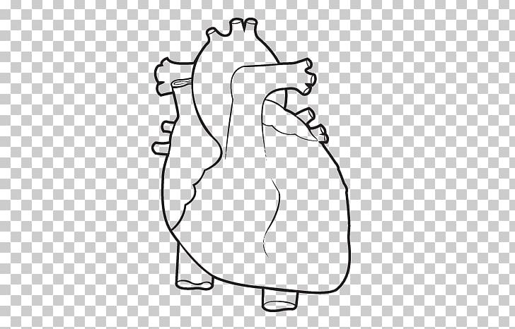 Coloring Book Anatomy Heart Human Body PNG, Clipart, Adult ...