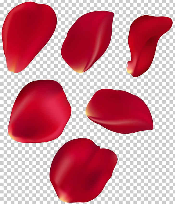 Petal Blue Rose PNG, Clipart, Blue, Blue Rose, Clip Art, Color, Drum Free PNG Download