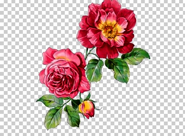 Watercolour Flowers Rose Watercolor Painting Png Clipart Annual