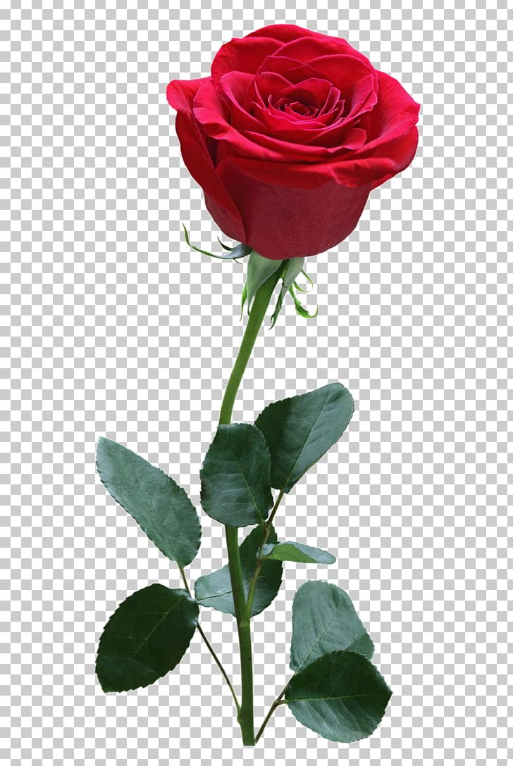 Rose Red PNG, Clipart, Artificial Flower, Cut Flowers, Download, Encapsulated Postscript, Floral Design Free PNG Download