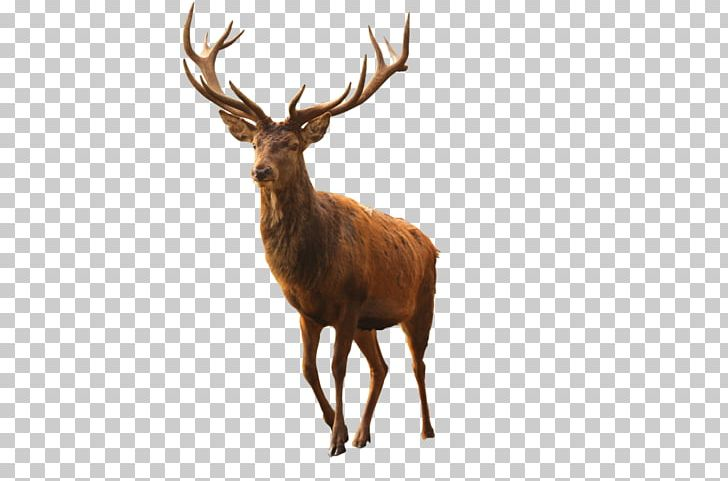 Cinemagraph Multiple Exposure Animated Film Photography PNG, Clipart, Animated Film, Antler, Art, Cinemagraph, Deer Free PNG Download