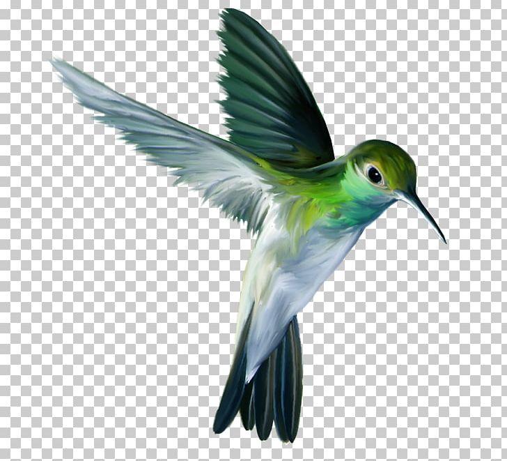 Hummingbird Parrot PNG, Clipart, Animal, Animals, Beak, Bird