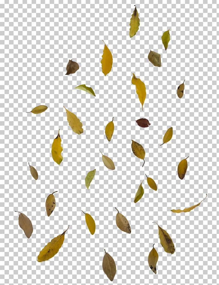Autumn Leaf Color PNG, Clipart, Autumn, Autumn Leaf Color, Branch, Color, Falling Leaves Free PNG Download