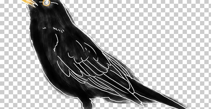 Beak Feather PNG, Clipart, Animals, Beak, Bird, Black And White, Feather Free PNG Download